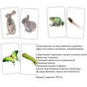 Карточки Домана Парочки Животное и детеныш