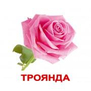 Комплект карточек Домана Квіти украинский язык