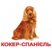 Комплект карточек Домана Породи собак украинский язык