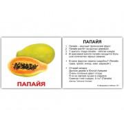 Карточки Домана Фрукты с фактами мини 40 русск