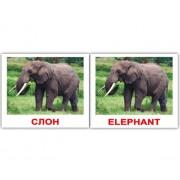 Карточки Домана Дикие жив  Wild animals мини 40 русск англ