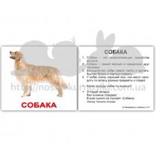 Карточки Домана Домашние животные с фактами на бел фоне мини 40 русск
