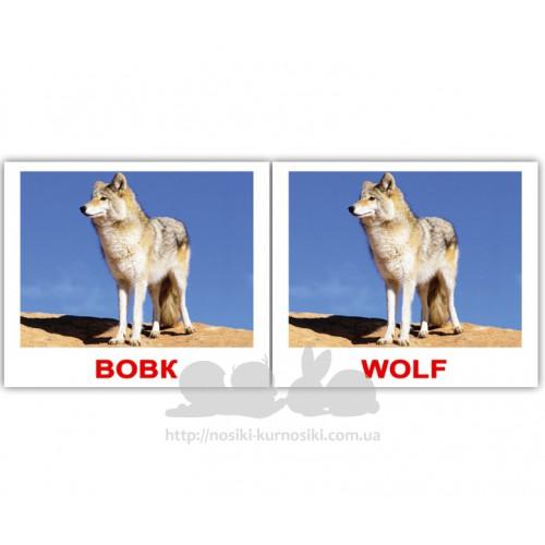 Карточки Домана Дикі тварини Wild animals мини 40 Укр Англ ... 64c39673699ad