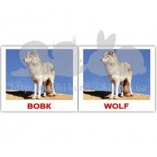Карточки Домана Дикі тварини Wild animals мини 40 Укр Англ