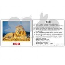 Карточки Домана Дикі тварини з фактами мини 40 Укр