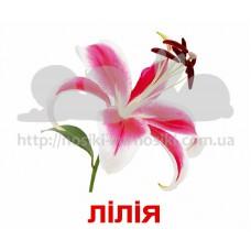 Карточки Домана Цветы с фактами Укр ламинированные