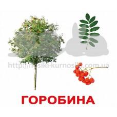Карточки Домана Деревья с фактами Укр ламинированные