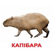 Карточки Домана Экзотические животные Укр ламинированные