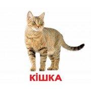 Карточки Домана Домашние животные с фактами Укр ламинированные