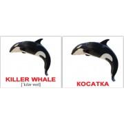 Мини карточки Домана англо-украинские Водяні тварини 40 шт