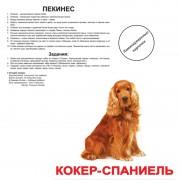 Карточки Домана Породы собак ламинированные русс