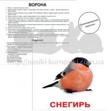 Карточки Домана Птицы ламинированные русс