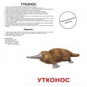Карточки Домана Экзотические животные ламинированные русс