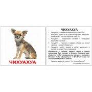 Мини карточки Домана Породы собак с фактами