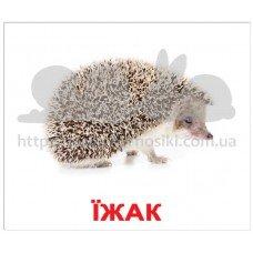 Карточки Домана Дикі тварини ламинированные