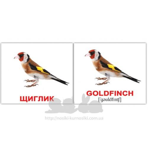 Карточки Домана Птахи-Birds мини 40 шт мини укр-англ купить в ... 3cc5a6e35ad67