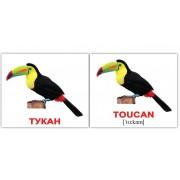 Карточки Домана Птицы-Birds мини 40 шт мини русск-англ