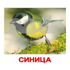 Комплект карточек Птицы Вундеркинд с пеленок