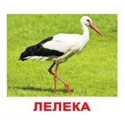 Комплект карточек Птахи українскою мовою Вундеркинд с пеленок
