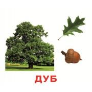 Комплект карточек Деревья Вундеркинд с пеленок