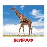 Комплект карточек Дикие животные Вундеркинд с пеленок