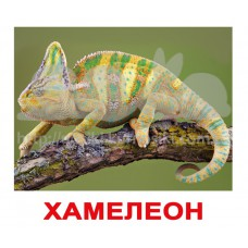 Комплект карточек Экзотические животные Вундеркинд с пеленок