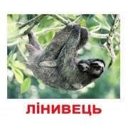 Комплект карточек Екзотичні тварини українскою мовою Вундеркинд с пеленок