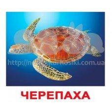 Комплект карточек Мешканці водойм українською мовою Вундеркинд с пеленок