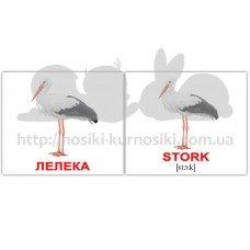 Карточки Домана Птахи-Birds мини 40 шт укр-англ