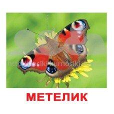 Комплект карточек Комахи українскою мовою Вундеркинд с пеленок