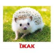 Комплект карточек Дикі тварини українскою мовою Вундеркинд с пеленок