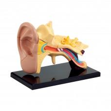 Набор для исследований Edu-Toys Модель анатомия уха сборная 7см SK012