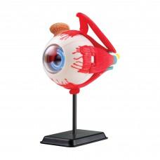 Набор для исследований Edu-Toys Модель глазного яблока сборная 14 см SK007