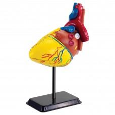 Набор для исследований Edu-Toys Модель сердца человека сборная 14 см SK009